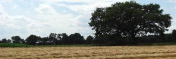Panoramaaufnahme eines Stoppelfeldes in der Wildeshauser Geest